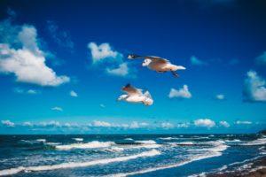 Strand Dierhagen Möwen