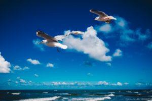 Möwen vor Wolken - Ostseebad Dierhagen