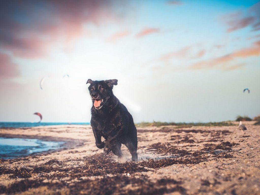 Ostseebad Dierhagen - Auszeit mit Hund