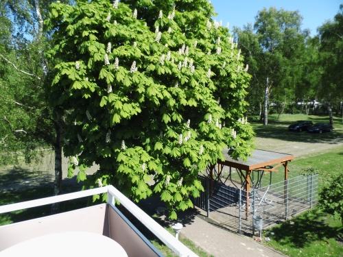 Balkon02 in Fotos